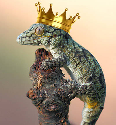 gecko with crown