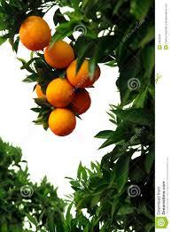 orangedownload