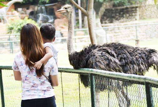 BALUARTE ZOO FAVORITE ATTRACTON. A child and his mother get a close encounter with an ostrich in Baluarte Zoo, now a tourist favorite destination in Vigan City. (Photo by Imelda C Rivero/PIA Ilocos Sur