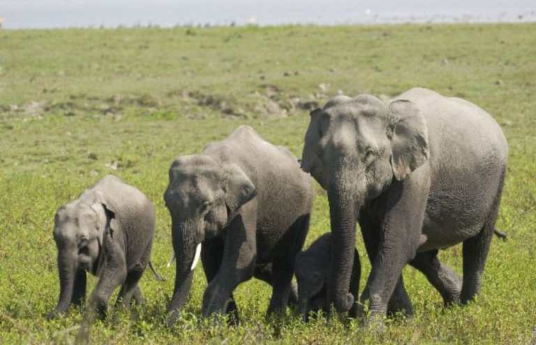 Assam: Kaziranga national park organized Elephant health camp