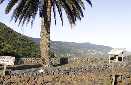 Typische Taxirouten aus dem Norden von La Palma. Von Los Sauces zu Mirador La Tosca · Taxi in La Palma.