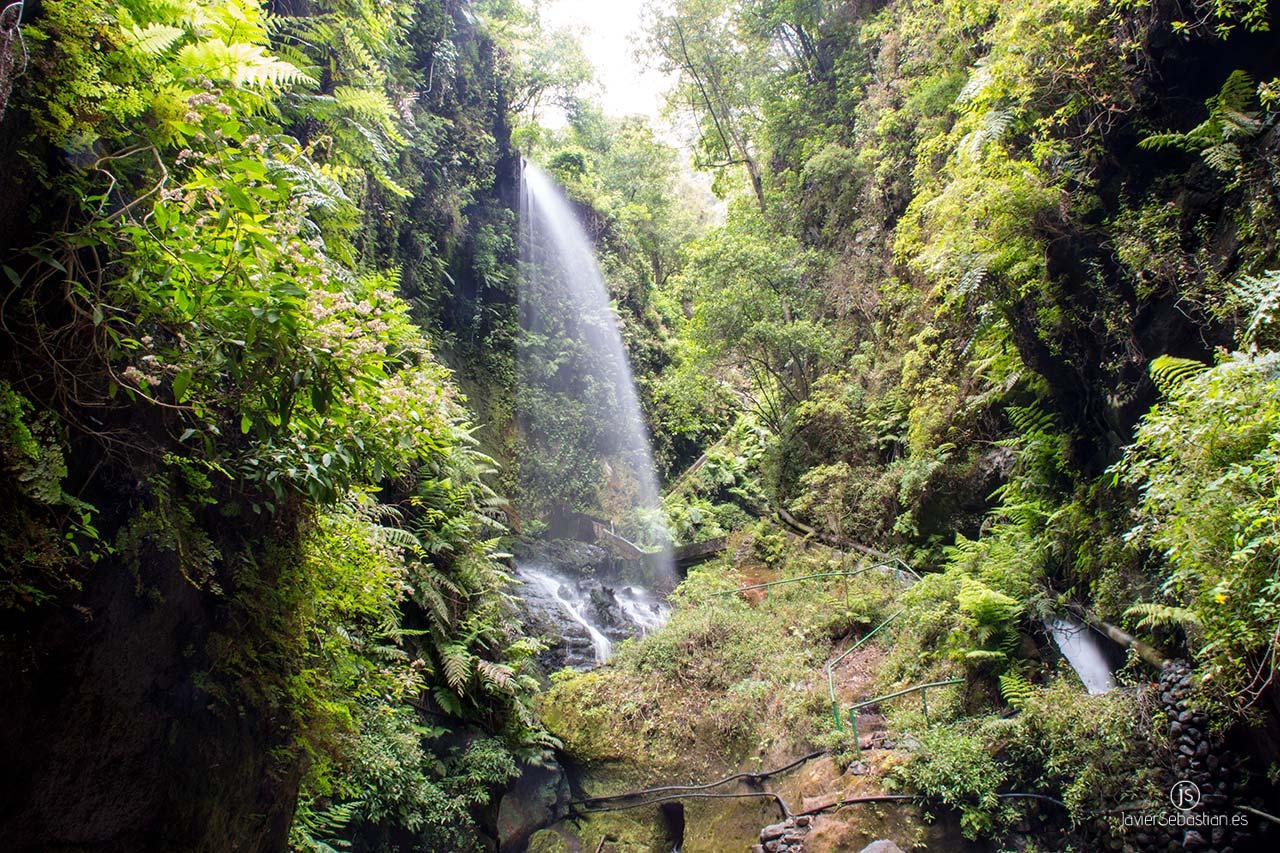 Bosque de Los Tilos · Servicios de taxi en la zona norte de La Palma · Islas Canarias