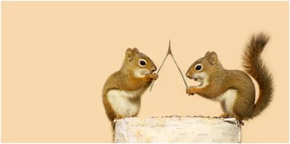 squirrels22