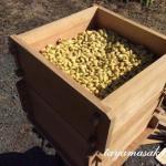 高島で体験!薪で大豆を蒸すこだわり味噌作りワークショップのお知らせです。
