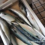 発酵食文化♪へしこひと樽漬けますよ~で使う鯖が届きました!