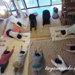 8月19日(月)和みのヨーガ開催のお知らせです。