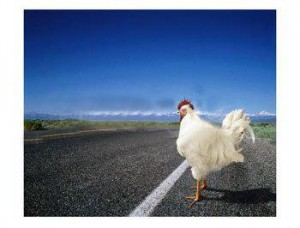 chicken-crossing
