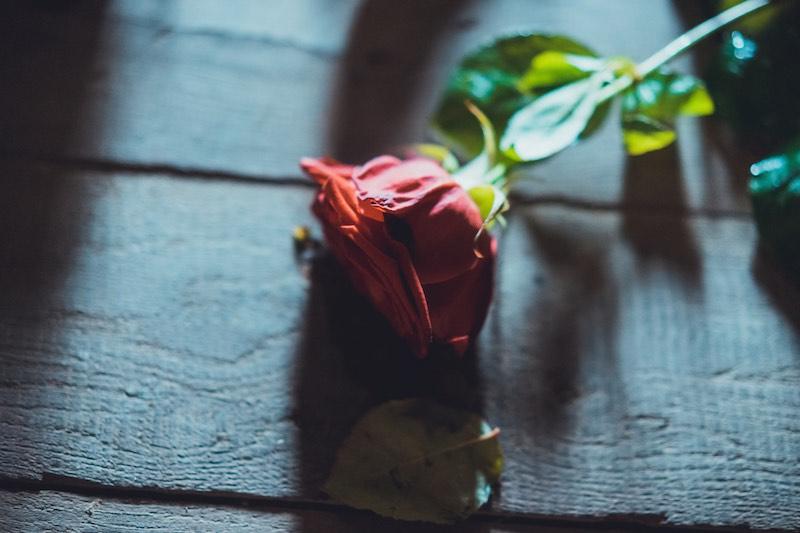 Rose vom Dornrösschen Foto-Shooting