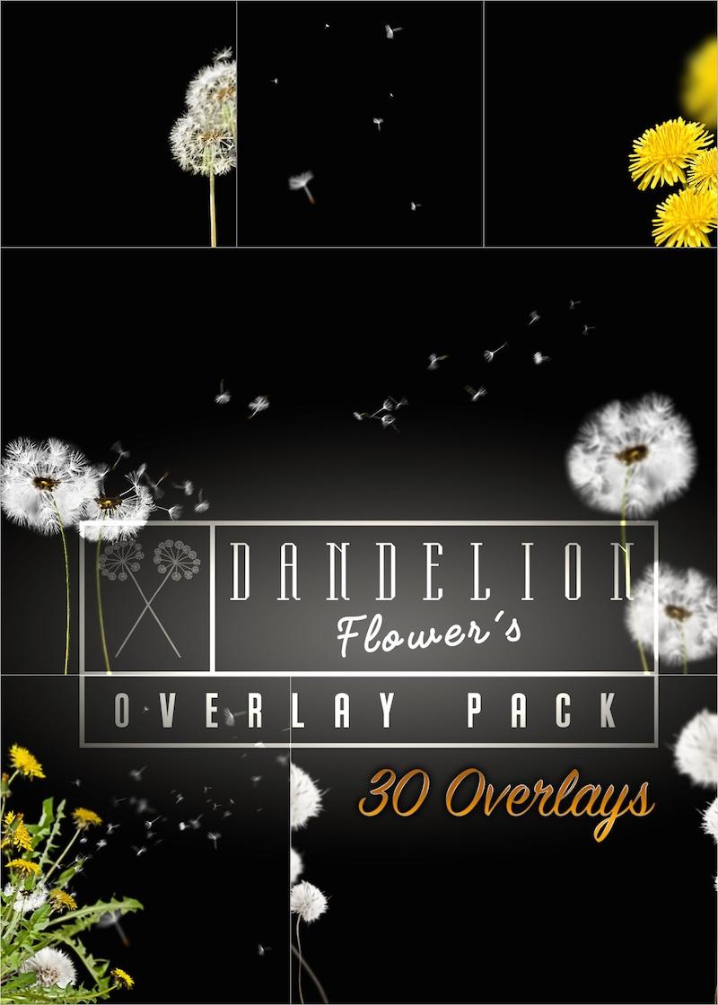Produktbild Overlay Paket Dandelion 2