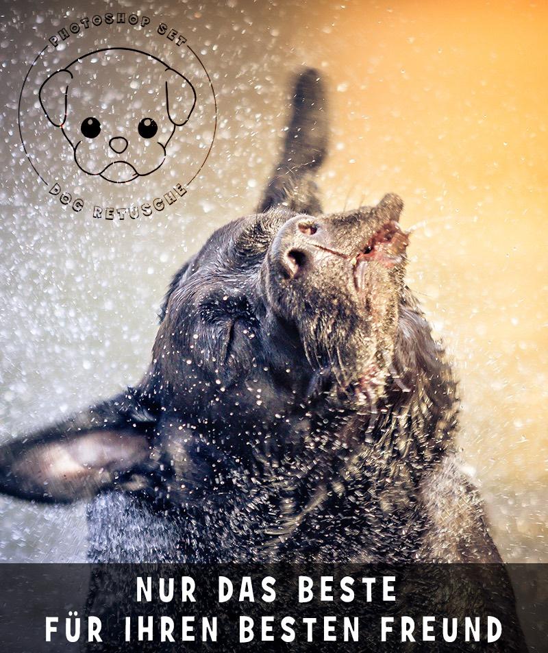 photoshop-dog-retusche-1