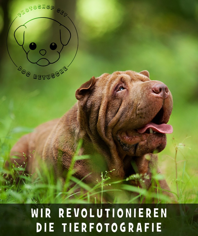 photoshop-dog-retusche-2