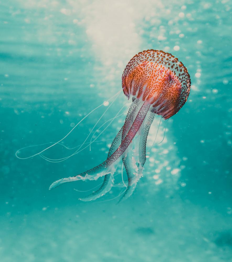 nachher-underwater-clean-1