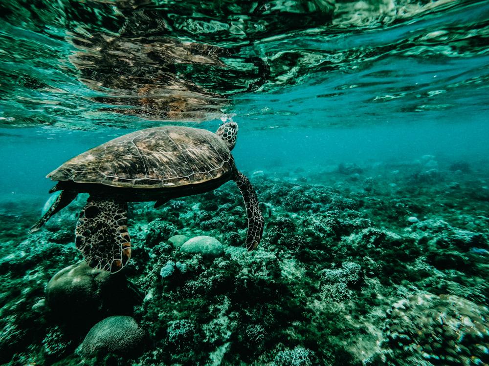 nachher-underwater-film-1