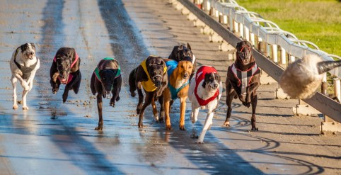 Dogs races