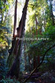 Titled Tree | Taylor Cannon Photography