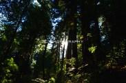 Hidden Light 2 | Taylor Cannon Photography