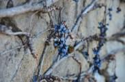 Grape Stone Bridge | Taylor Cannon Photography