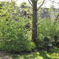Native Plants 101: How About A Hedgerow?