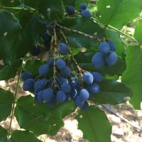 Events in August: Attend a Native Plant Walk