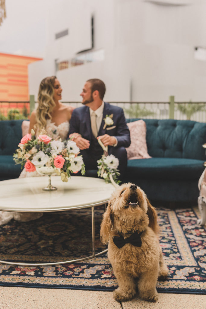 dog poses for wedding portraits on Park MGM Terrace photographed by Taylor Made Photography