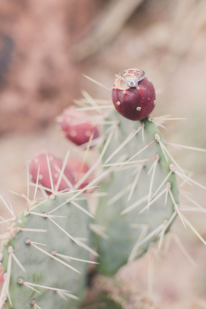 wedding ring on cactus by Taylor Made Photography