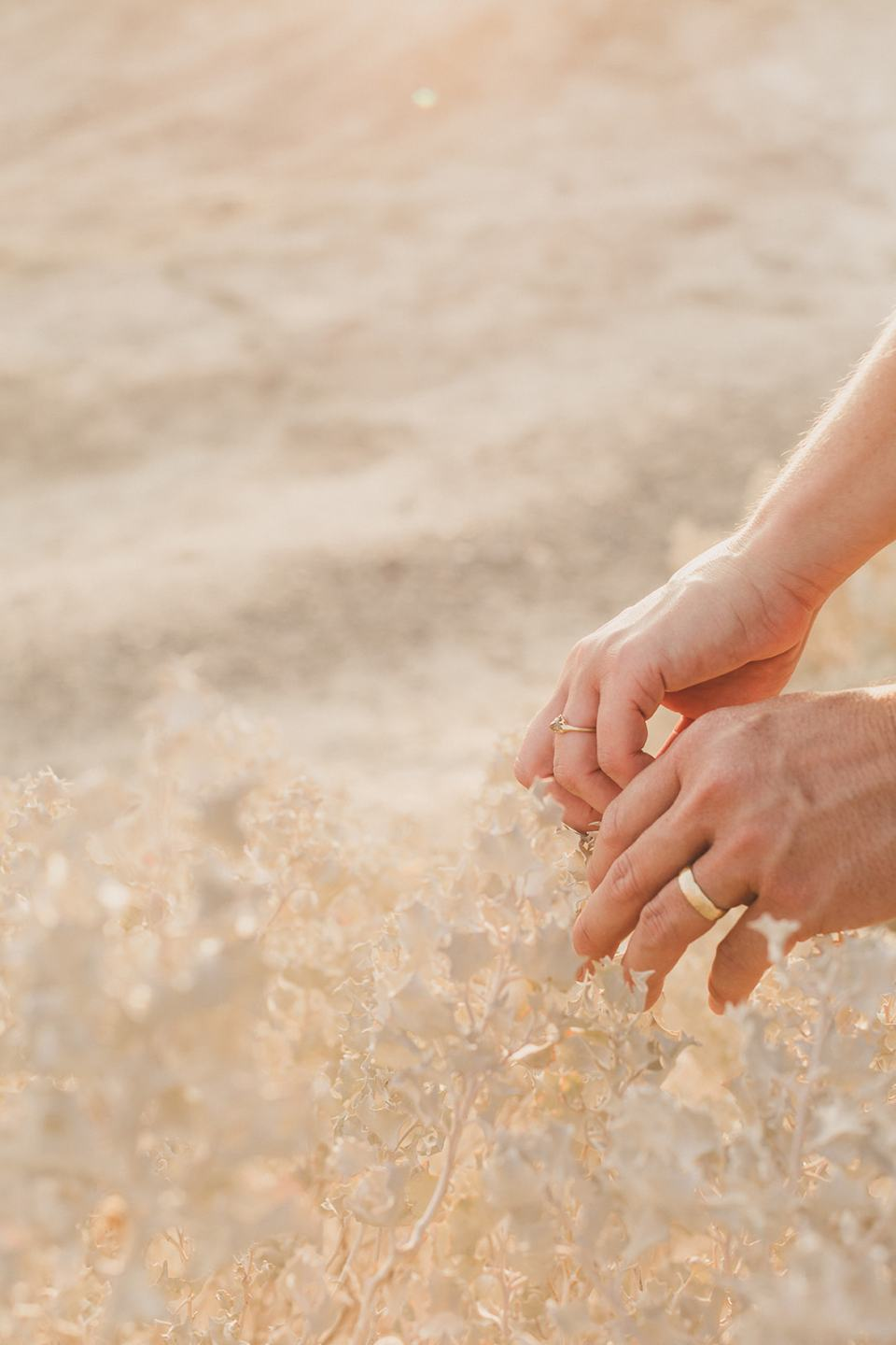 bride and groom's hands over bush at Zabriskie Point