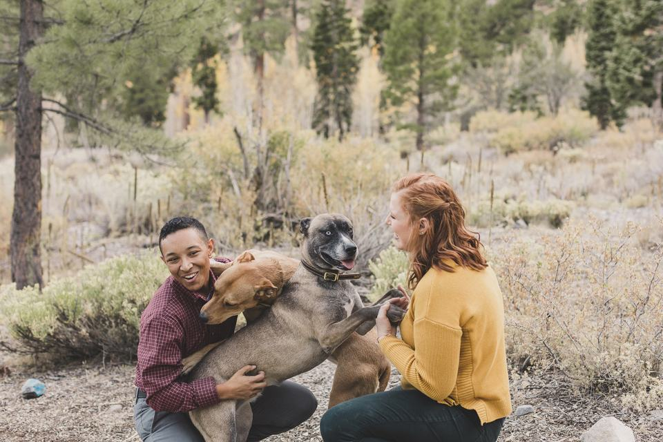 parents play with dogs in Las Vegas