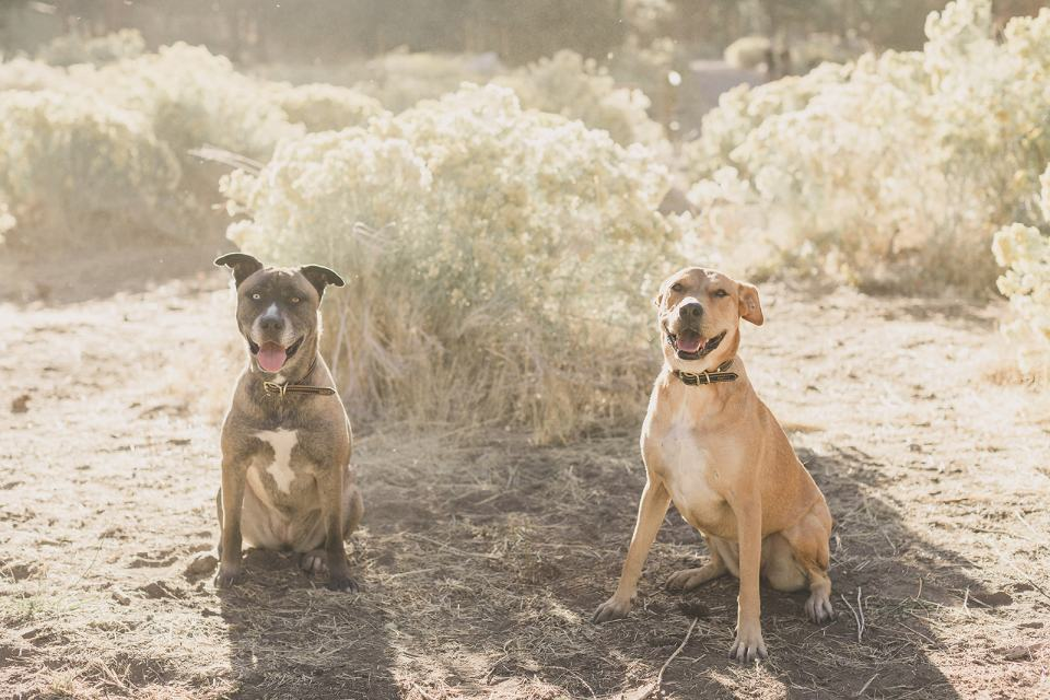 dogs sit together in Kyle Canyon