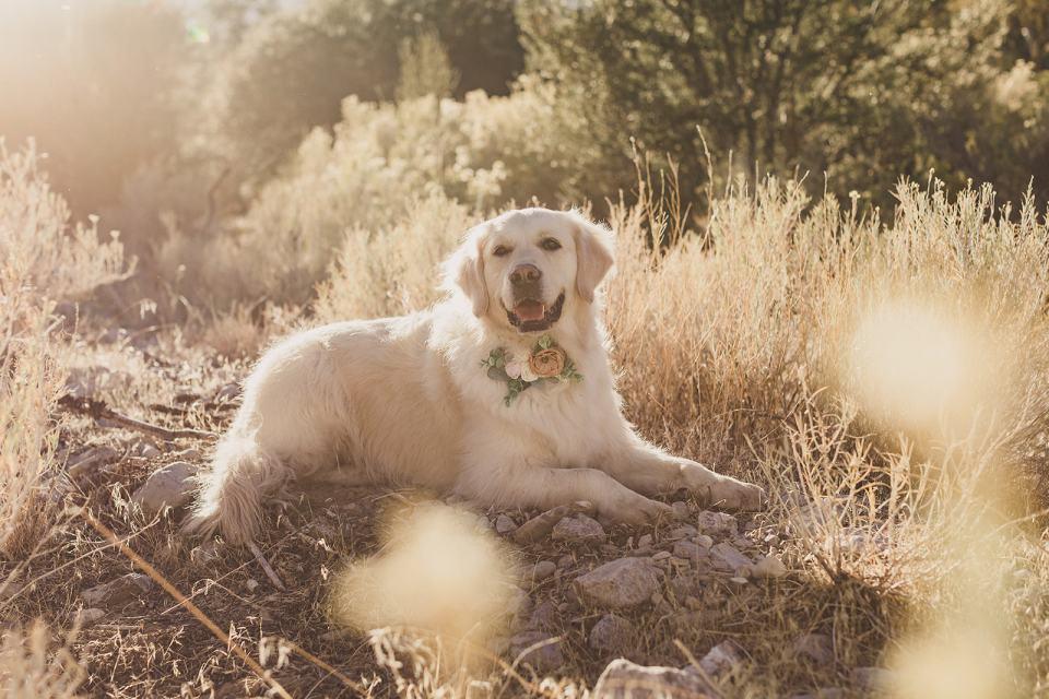dog poses during Kyle Canyon family photos