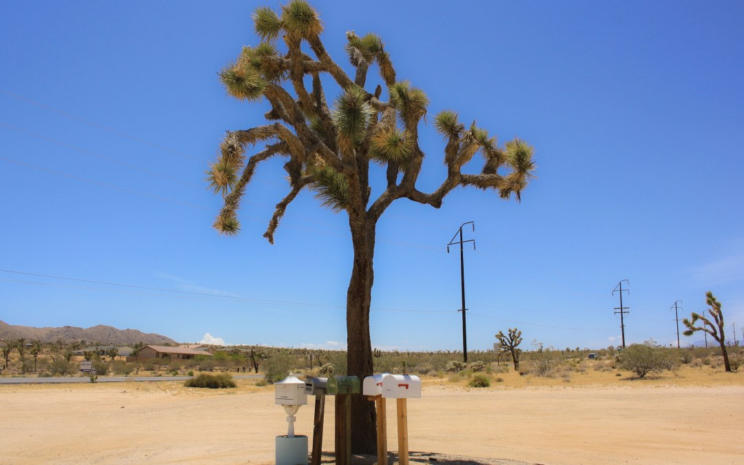 How to Spend A Day In Joshua Tree
