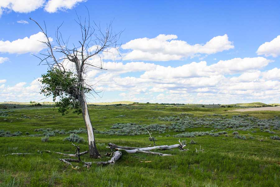 What to Expect at the Great Sandhills of Saskatchewan
