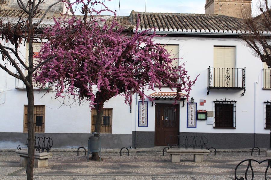 A white building in Granada Spain with a pink flowering tree in front