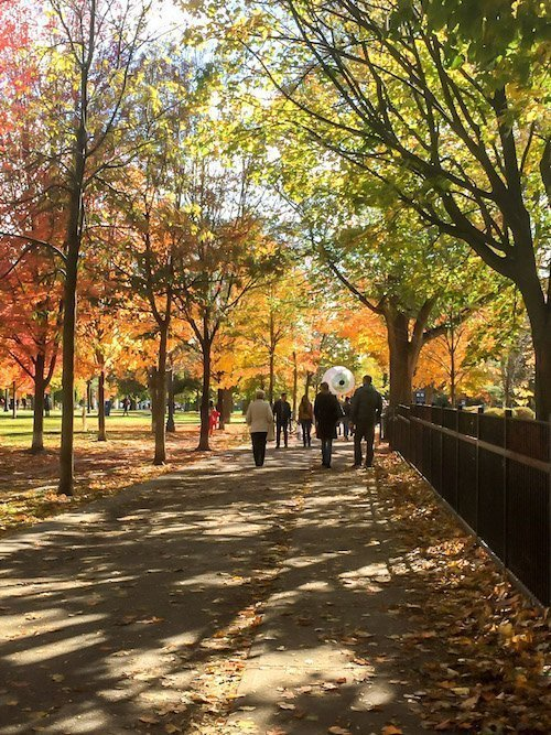 50 Best Things to do in Toronto, Ontario