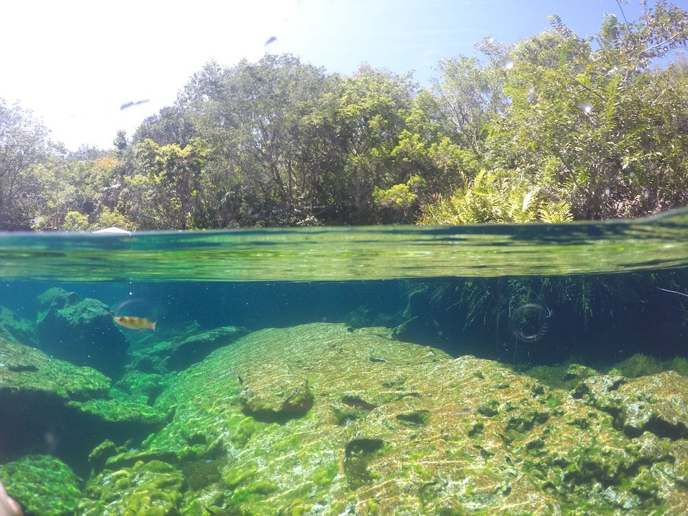 Above and below water photo with fish in jardin del eden cenote in Mexico
