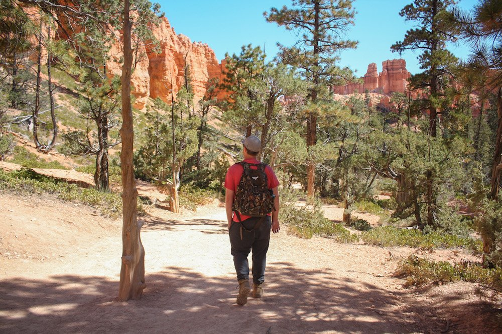 A man walks among towering trees and hoodoos in Bryce Canyon National Park