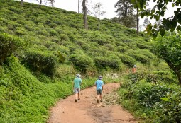 "Walking to"" little Adams Peak"""