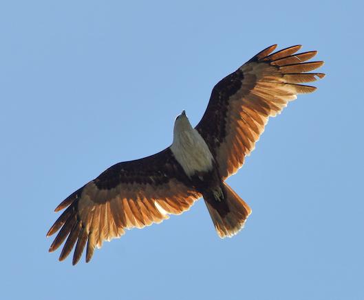 trinco to batti eagle