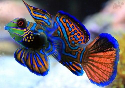 К чему снится покупать рыбу? Сонник покупка рыбы во сне