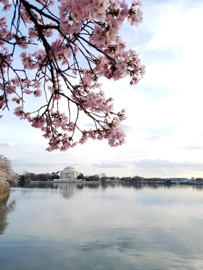 Cherry Blossom Festival DC