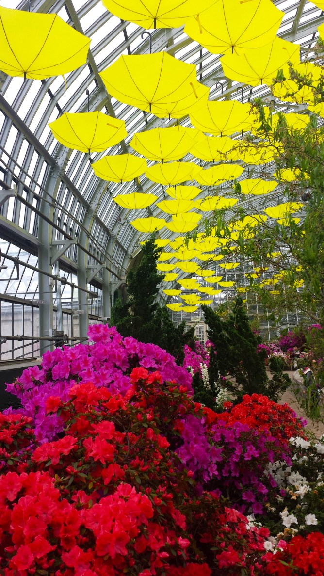 Garfield Park Conservatory Chicago 3