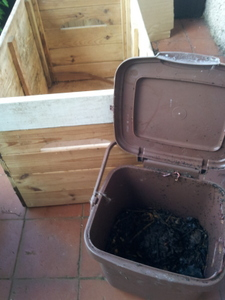 Bucket of compost worms ready for transfer
