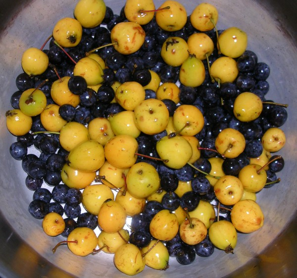 crab apples and sloes