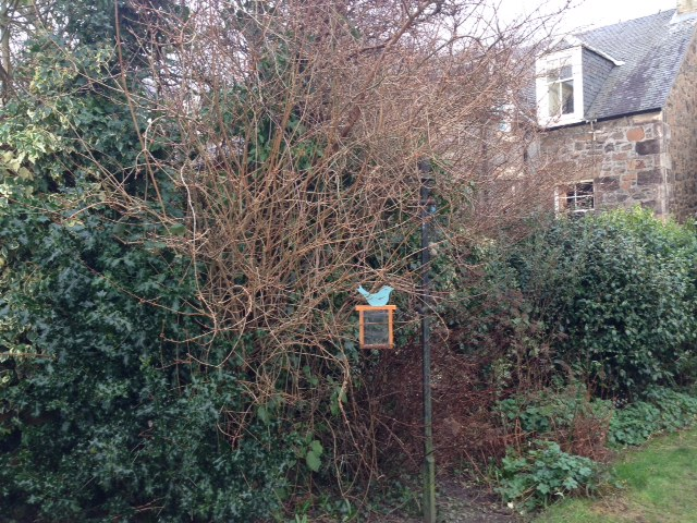 Bird feeder in a bushy garden border