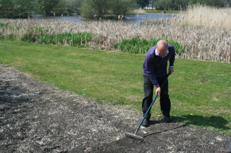 Billy raking the seeds in