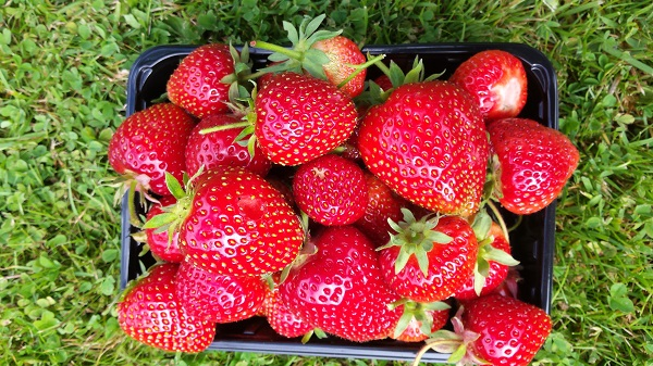 A photo of a punnet full of strawberries on a lawn