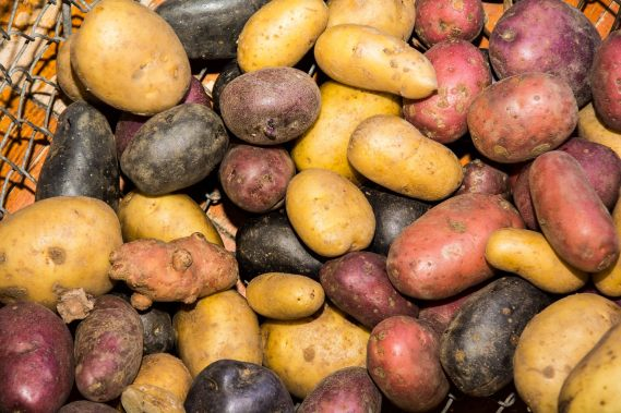 A photo of a variety of potatoes