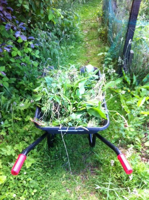 A photo of a wheelbarrow full of weeds