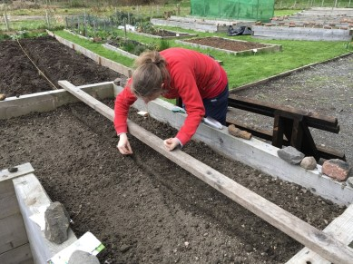 Shona sowing outdoor salad crops