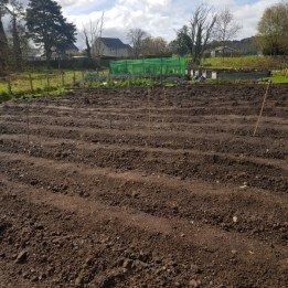 The perfect potato field all planted up
