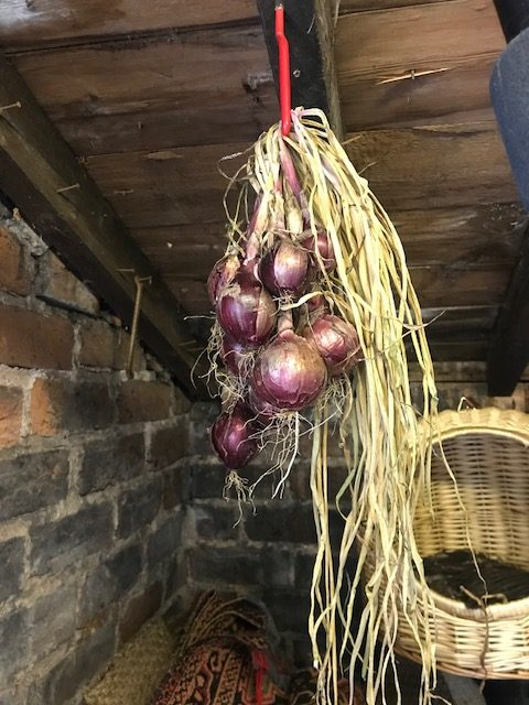 onion plaits